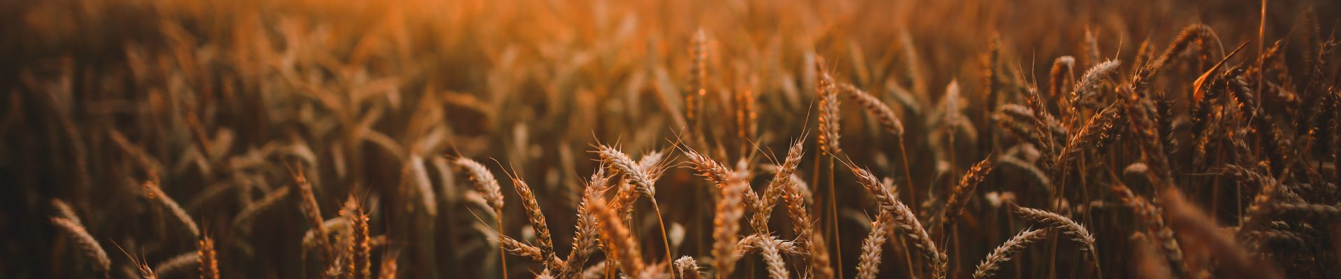 Reach the unreached: The harvest is ready